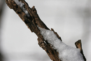 Snow-Branches-1